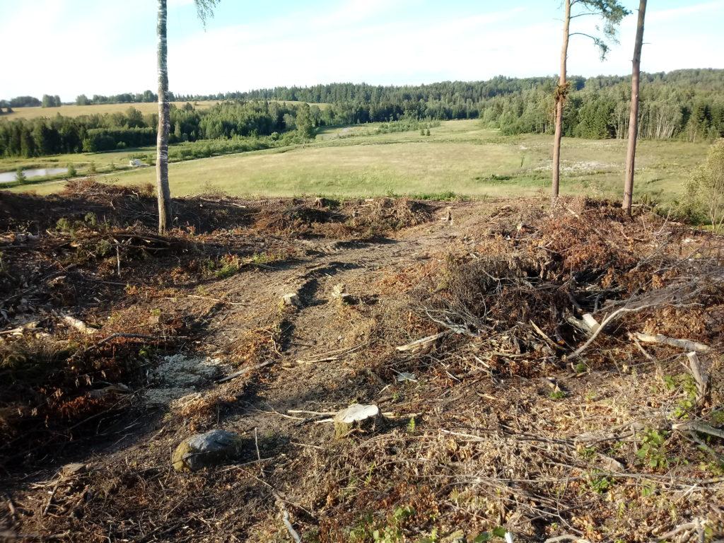 Lagedaks raiutud, segi pööratud ja tallatud mets loodusmaastiku taustal